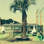 2014年3月 椰子の木植樹