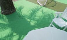 椰子の木陰で・・・・・
