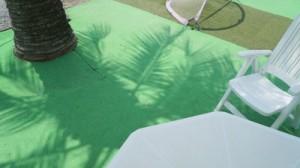 椰子の木陰で